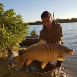beautiful river carp in the evening light