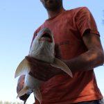 grosse Barbe gefangen im fishing camp torpedo form schön ersichtlich
