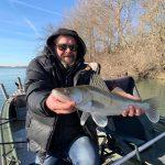 schöner winter zander aus dem fishing camp serravalle in italien